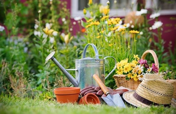 Effective Tips for Gardening and Lawn Care